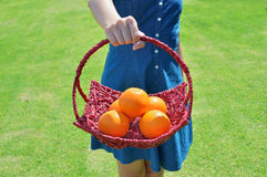 Healthy ripe oranges on a bright sunny. Woman holding a basket of oranges in the grass Stock Photos