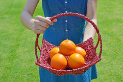 Healthy ripe oranges on a bright sunny. Woman holding a basket of oranges in the grass Royalty Free Stock Images