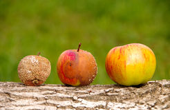 Healthy and rotten apple. S on a wooden background royalty free stock image