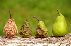 Healthy and rotten pear. On a wooden background stock photography