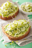 Healthy rye bread with avocado cucumber radish sprouts Royalty Free Stock Photography
