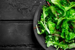 Healthy salad. Arugula salad in a bowl. On a black rustic background stock images