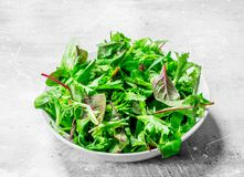 Healthy salad. Arugula salad in a bowl. On a rustic background stock image