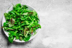 Healthy salad. Arugula salad in a bowl. On a rustic background royalty free stock image