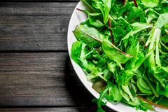 Healthy salad. Arugula salad in a bowl. On a wooden background royalty free stock images