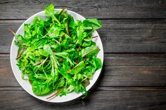 Healthy salad. Arugula salad in a bowl. On a wooden background royalty free stock image