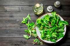 Healthy salad. Arugula salad in a bowl. On a wooden background stock image