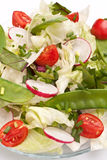 Healthy salad with Bok Choy Royalty Free Stock Photography