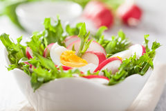 Healthy salad with egg radish and green leaves.  Royalty Free Stock Photography
