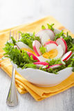 Healthy salad with egg radish and green leaves Royalty Free Stock Image