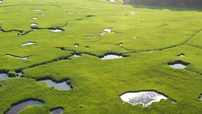 Aerial View of Beautiful Salt Marsh on Cape Cod stock video