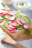 Healthy sandwich with radish cucumber and cream cheese Stock Image