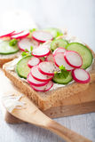 Healthy sandwich with radish cucumber and cream cheese Stock Photos