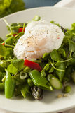 Healthy Scafata with a Poached Egg Stock Image