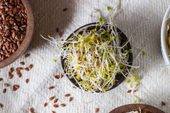 Healthy seeds and sprouts Stock Image
