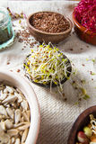Healthy seeds and sprouts Royalty Free Stock Photography