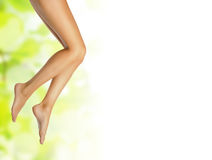 Healthy sexy slender female legs Royalty Free Stock Photography
