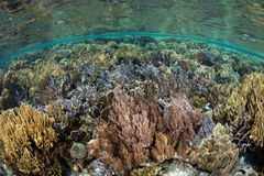 Healthy, Shallow Coral Reef stock photo