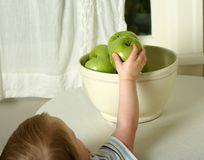 Healthy snack. Small child reaches for a healthy Granny Smith apple out of bowl, off white casual setting royalty free stock images