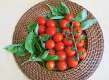 Healthy snack of cherry tomatoes on a stem with basil on wicker plate for vegans. Fresh cherry tomatoes filled with vitamin C for a healthy snack for vegans and Royalty Free Stock Photography