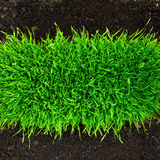 Healthy in soil. Healthy grass growing in soil pattern royalty free stock image