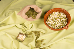 Healthy soy beans and sprouts Royalty Free Stock Images