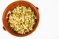 Healthy soy sprouts Royalty Free Stock Image