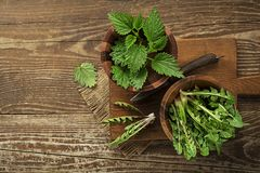 Healthy spring food with nettle and dandelion royalty free stock images