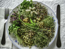 Healthy sprout salad , super food. Dinner plate full of different kinds of sprouts and nuts stock image