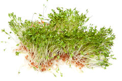Healthy sprouts Royalty Free Stock Photography