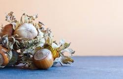 Healthy still life autumn harvest ripe hazelnut Corylus Maxima. Organic filbert cobnuts with dried leaves on stony background. Mac. Ro view, selective focus Stock Photos