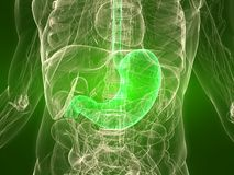 Healthy stomach Royalty Free Stock Photography