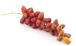 Red dates. Healthy sweet fruits red dates Stock Images