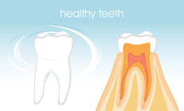 Healthy teeth on the blue background Royalty Free Stock Photo