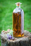 Healthy tincture made of lavender in summer Stock Photos