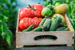 Healthy tomatoes and cucumbers to groceries Royalty Free Stock Photos