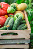 Healthy tomatoes and cucumbers in wooden box Royalty Free Stock Photography