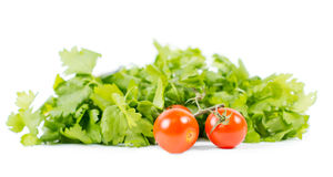 Healthy tomatoes on vine in front of green salad royalty free stock photos
