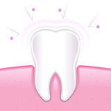 Healthy Tooth And Gum Protected From Germs Royalty Free Stock Image