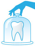 A healthy tooth is protected by a glass dome. Royalty Free Stock Images