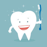 Healthy Tooth Stock Image