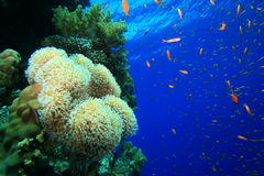 Healthy Tropical Coral Reef Stock Images