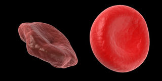Healthy and unhealthy blood cell Stock Photography