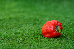 Healthy vegetable food theme: red ripe peppers lying on green grass Royalty Free Stock Photos