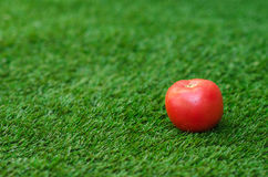 Healthy vegetable food theme: red ripe tomato lying on green grass. Studio Royalty Free Stock Photo