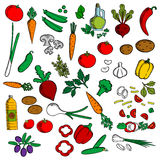 Healthy vegetables with condiments sketch icon Stock Photography