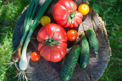 Healthy vegetables in sunny garden Royalty Free Stock Photography