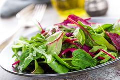 Healthy vegetarian dish, leafy salad with fresh chard, arugula, spinach and lettuce. Italian mix Stock Images