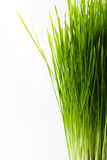 Healthy Wheatgrass Royalty Free Stock Photography