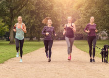 Healthy Women Jogging at the Park with a Dog Royalty Free Stock Image